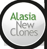 ALASIA NEW CLONES